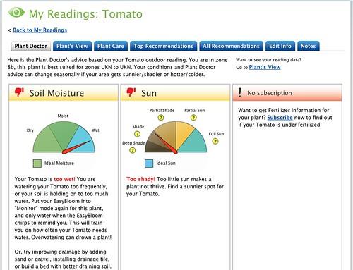 EasyBloom Tomato