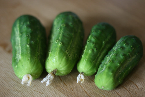 These cukes were born for pickling