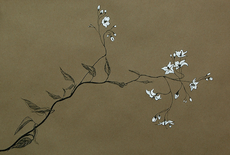 _white_flowers_