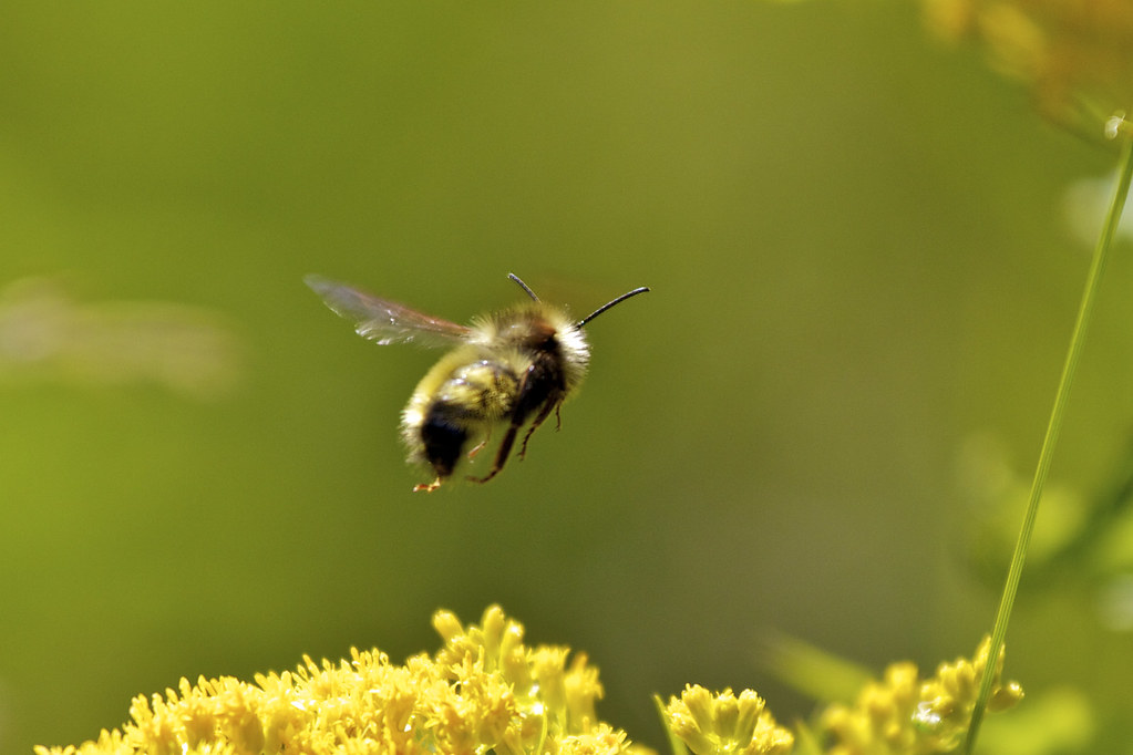 Bee 281/365