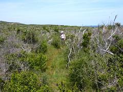 Sentier côtier Rondinara - Balistra : après U Marescu en direction d'U Sarpente