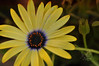 Alive (Ashley Cisneros) Tags: flowers nature yellow photoshop energy warm sweet alive growing tones