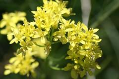 wildflowers 136