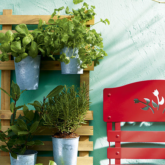 Small Yard Solution: <br>Trellis Mounted Herb Garden