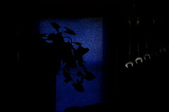 blue window (It'sGreg) Tags: plant window wrenches ironphotographer likeinadream utata:project=ip105