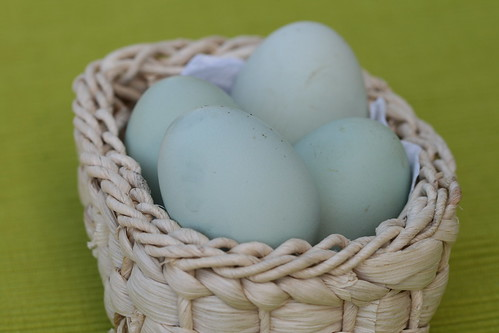 Eggs from our chicken / Meie kanade imeilusad munad