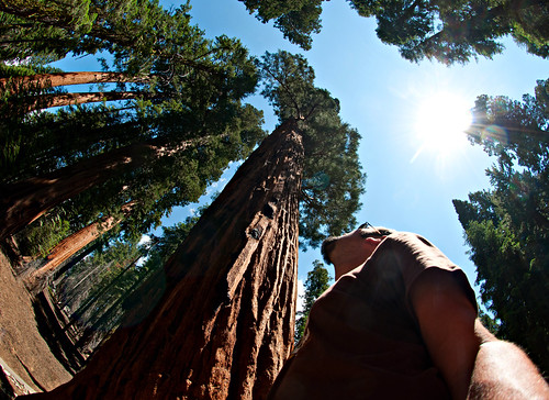 Sequoia National Park 18