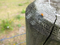 Ladybug (Adam Kuban) Tags: france honeymoon hiking normandy montsaintmichel saltmeadows hikeday3 sentiersdefrance