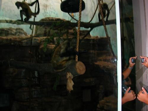 July 31 2010 Zoo