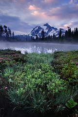 Shuksan View (Vinnyimages) Tags: lake washington northwest meadows cascades pacificnorthwest washingtonstate mountbaker mountian northcascades shuksan mountshuksan picturelake mtbakersnoqualmienationalforest mtbakersunrise vinnyimages wwwvinnyimagescom vinnyimagescom