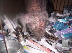 Cachorro em péssimas condições comprado de um carroceiro