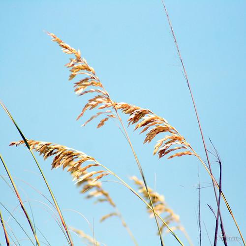 Jekyll Grass 1