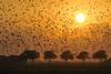(jonlp) Tags: sunset sun birds landscape eguzkia txoriak paisajea