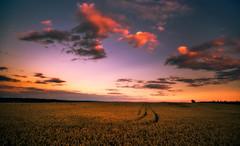 after the sun has gone (Dennis_F) Tags: red sky orange sunlight color rot colors field yellow clouds zeiss germany landscape deutschland skies sony wide feld himmel wolken gelb fullframe dslr farbe ultra ssm farben lanschaft 1635 uwa weitwinkel ultrawideangle sonnenlicht uww a850 163528 sonyalpha sonydslr vollformat zeiss1635 sal1635z cz1635 dslra850 sonya850 sonyalpha850 alpha850 sonycz1635