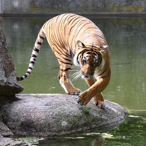 Zoo Berlin - IMG_1870ax