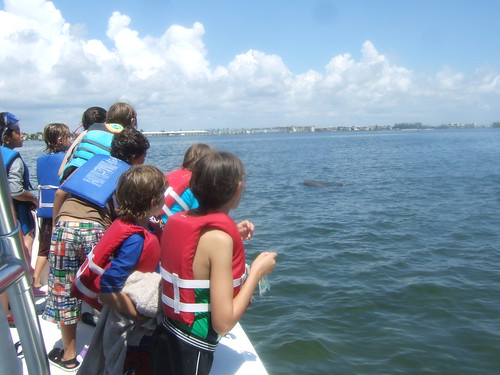 Bottlenose dolphin encounter