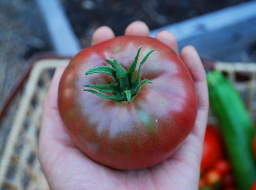 Ripe Cherokee Purple Tomato