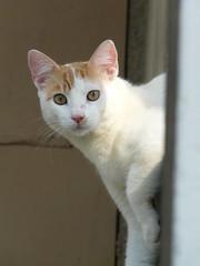 Pachin (fredocarroz) Tags: cats pets venezuela gatos mascotas flickraward alfredorojas fredocarroz