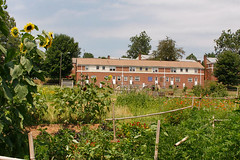 the Peace Garden, Pisgah View Apartments in background (by: Jonathan Welch, Mountain Xpress)