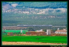 Avant, cereales y olivos (Jos Francisco_(Fuen446)) Tags: train tren trenes trains olivos avant 104 mlaga renfe olivares olivar altavelocidad highspeedtrains s104 bobadilla altavelocidadespaola