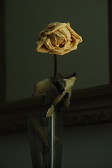 Rose (Mira Culeuse) Tags: old abstract macro rose room mirrow objektiv