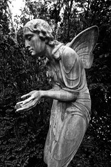 Psyche with butterfly wings (michael_hamburg69) Tags: bw sculpture friedhof cemetery angel butterfly germany deutschland skulptur monochrom engel falter psyche figur schmetterling 1927 flügel arthurbock hamburh schmetterlingsflügel z25245248 z26298300