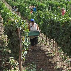 Inversión en el sector vitivinícola para exportar