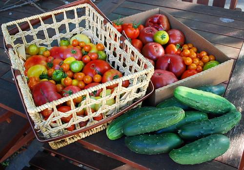 August Tomato Harvest