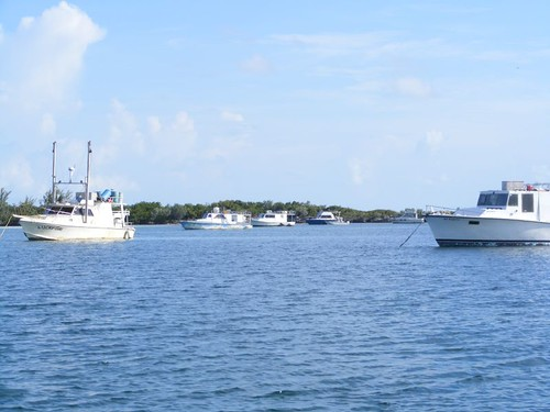 Bahamian Fishing Fleet