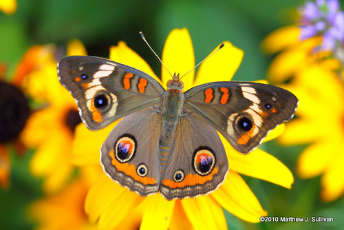 Best Beautiful Butterfly Pictures, Best Beautiful Butterfly, Best Butterflies