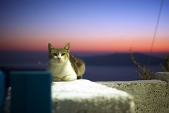 Tu m'attendais ? (Maël - LB) Tags: sunset mer animal rose cat rouge chat europe pierre atmosphere super bleu santorini greece ciel lumiere ia soir situation nuit santorin couleur crepuscule oia liberte cyclades grece thira coucherdesoleil fira ambiance attente egee meregee grecesantorin