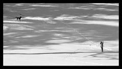 Come Back! (Jerrica Raglin) Tags: dog pet white snow black digital person photography shadows humor tracks footprints monotone human platinumheartaward