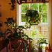 The Summer Window