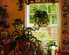 The Summer Window (faith goble) Tags: trees plants color art home window kitchen lamp yellow corner fence lights chair warm artist poem afternoon photographer view kentucky ky faith free ivy vine sunny stainedglass cc pots creativecommons poet pottery writer croton plates paintbrush bowlinggreen spiderplant aloevera hangingbasket goble firsthand faithgoble gographix theoriginalgoldseal gloriosadasiy faithgobleart thisisky