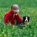 Herding Competition, Arlington WA