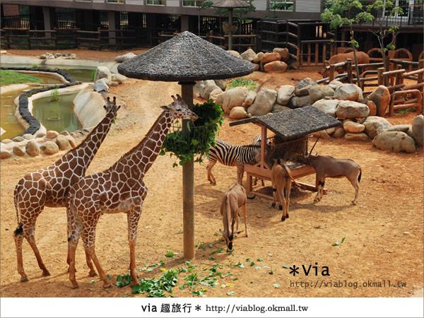【新竹住宿】來去和動物住一晚~關西六福莊生態渡假旅館13