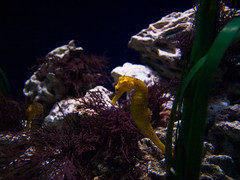 fish6 (christian.lischke) Tags: valencia oceanografic cityofartsandsciences