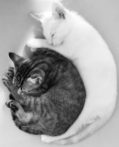 フリー写真素材, 動物, 哺乳類, ネコ科, 猫・ネコ, 子猫・小猫, 寝顔・寝ている,