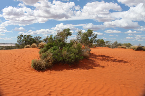 Sand dune near Curtin Springs