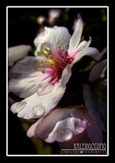 Almendro en Flor - After the Rain