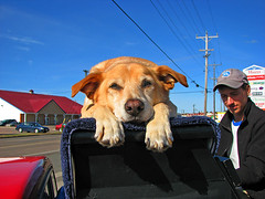 Traveling Piano Sackville, Canada (TravelingPianoMan) Tags: music dog canada truck out fun outdoors friendship random unique live performing piano pickup player novelty jamming danny hanging boner traveling performers impromptu mydog jammers spontaneous synchronicity kean duets spontaneity my