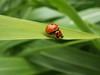 no privacy.. (fata_ci) Tags: macro verde estate natura insetti naturesfinest mywinners ysplix