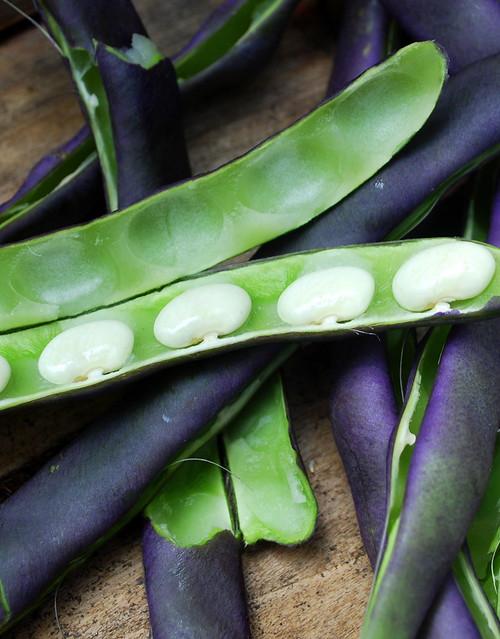 Purple beans 1