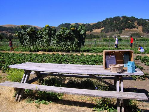 Classic Organic Farm