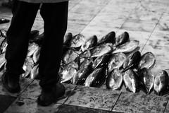 11 (dying regime) Tags: people fish male mas market massacre knife cutting mass tuna maldives butchery tunarepublic