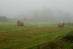 Foggy Morning Meadow (k.landerholm) Tags: morning field minnesota fog flickr hay twincities 525 2010 haybales gow rosemount dakotacounty d80 umorepark gopherordnanceworks 525of2010