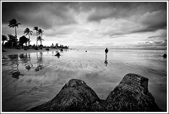 The tale of a difficult past [..Kuakata, Bangladesh..] (Catch the dream) Tags: sea beach seabeach seashore shore sands vast wide man lonely walking walk bw monochrome reflection reflectiononbeach beachreflection clouds storm stormy cloudy coconut dead trunk treetrunk coconuttree kuakata kwakata kuwakata patuakhali bangladesh blackwhite bnw explore frontpage gettyimagesbangladeshq2
