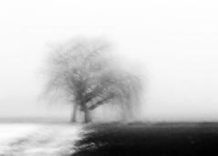 hug 5 (nicola tramarin) Tags: trees bw italy blur fog alberi hug italia nebbia willows icm biancoenero mosso abbraccio salici intentionalcameramovement nicolatramarin