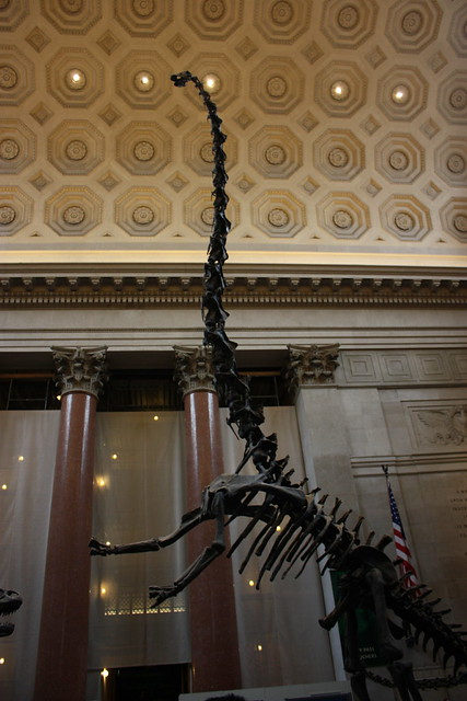 American Museum of Natural History #1, by MacDara on Flickr.