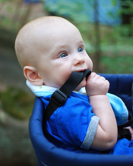 A baby chewing on a strap.